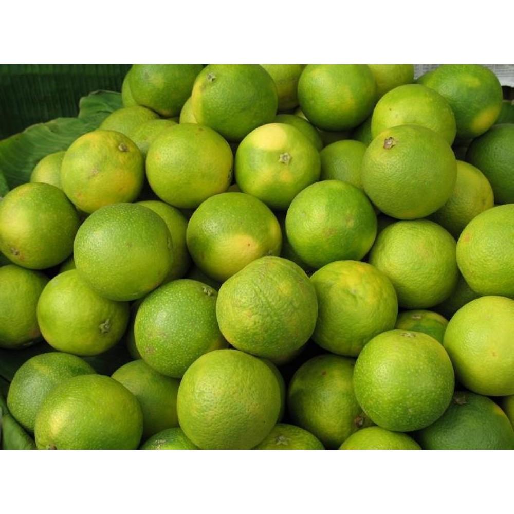 Mosambi (Sweet lime, sweet lemon)
